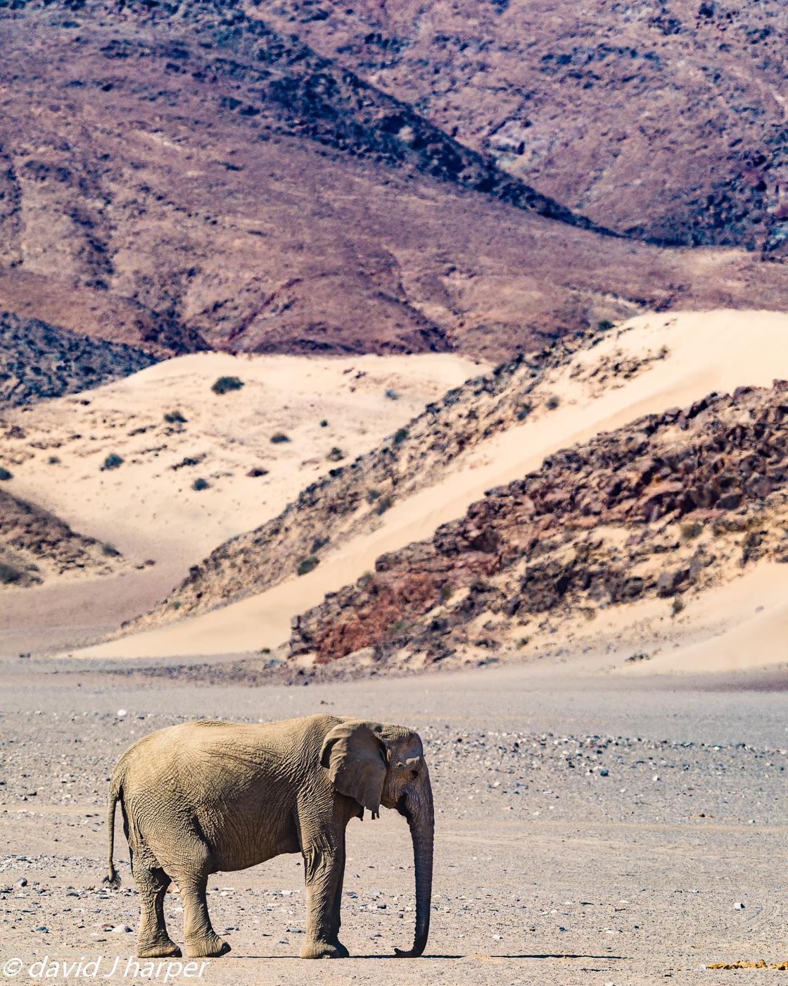 DJH-Namibia-20171019-0P0A8967