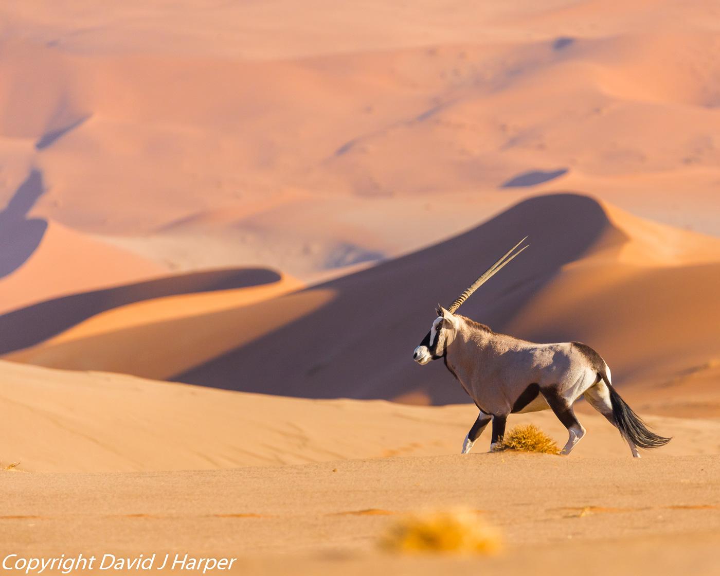 DJH-Namibia-20171026-0P0A6927