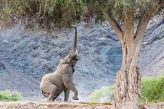 DJH-Namibia-20171017-0P0A7070-2